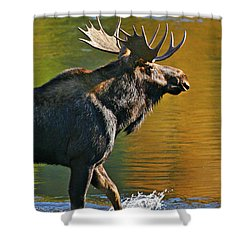 Wading Moose Shower Curtain
