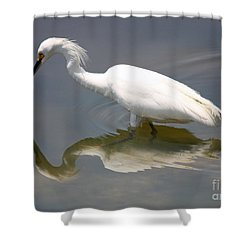 Wading Snowy Egret Shower Curtain by Carol Groenen