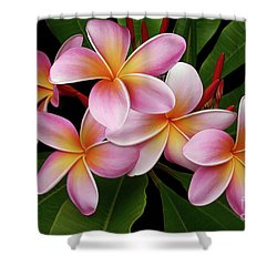 Wailua Sweet Love Texture Shower Curtain