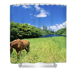 Wainiha Valley Shower Curtain by Peter French - Printscapes