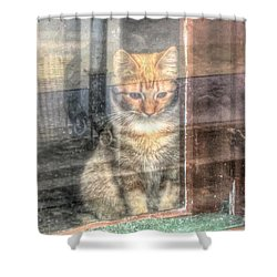 Shower Curtain featuring the pyrography Wait Cat by Yury Bashkin