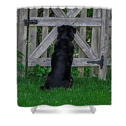 Waiting At The Gate Shower Curtain
