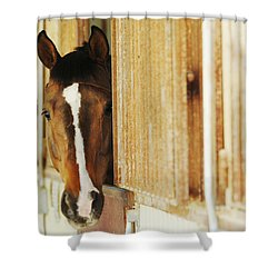 Waiting For A Ride Shower Curtain by Jill Reger
