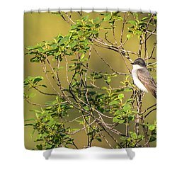 Waiting For A Victim Shower Curtain by Onyonet  Photo Studios