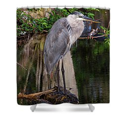 Waiting For Breakfast Shower Curtain by Lamarre Labadie