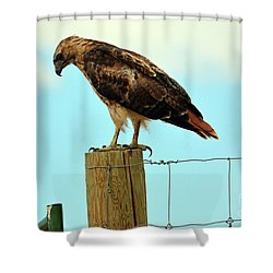 Waiting For Lunch...? Shower Curtain