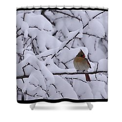 Shower Curtain featuring the photograph Waiting For Mr. C by Shari Jardina