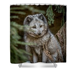 Shower Curtain featuring the photograph Waiting For Red by Wade Brooks