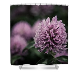 Waiting For Summer Shower Curtain by Miguel Winterpacht