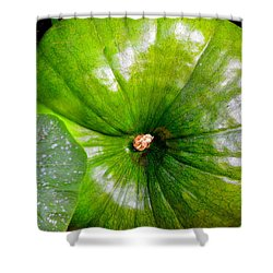 Six More Weeks Shower Curtain