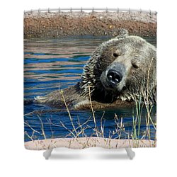 Waiting On Lunch Shower Curtain by Karen Wiles