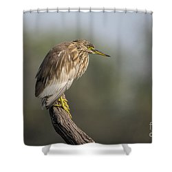 Waiting Patiently Shower Curtain by Pravine Chester