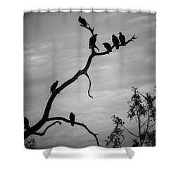 Waiting Shower Curtain by Robert Meanor