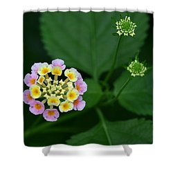 Shower Curtain featuring the photograph Waiting Their Turn by Shari Jardina