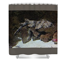Waiting To Eat You - Spotted Wobbegong Shark Shower Curtain by Richard W Linford