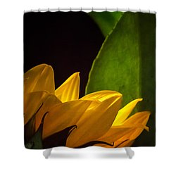 Waking Up Shower Curtain