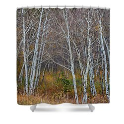 Shower Curtain featuring the photograph Walk In The Woods by James BO Insogna