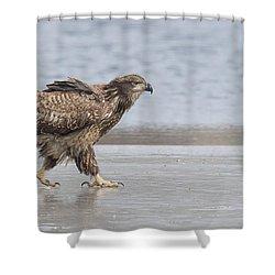 Walk Like An Eagle Shower Curtain by Kelly Marquardt