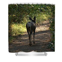 Walk On Shower Curtain