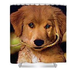 Walkies...pleeease Shower Curtain by Steve Harrington