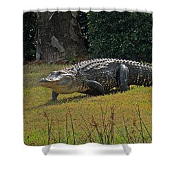 Walking Appetite Shower Curtain