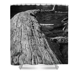 Walking On A Log Shower Curtain
