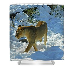 Walking On The Wild Side Shower Curtain