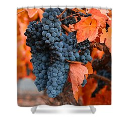 Shower Curtain featuring the photograph Walking Though The Vineyard by Lynn Hopwood