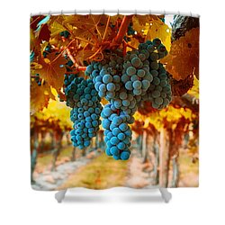 Walking Through The Grapes Shower Curtain by Lynn Hopwood