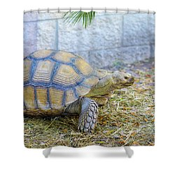 Shower Curtain featuring the photograph Walking Turtle by Raphael Lopez
