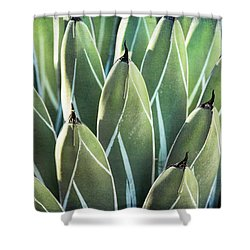 Shower Curtain featuring the photograph Wall Of Agave  by Saija Lehtonen