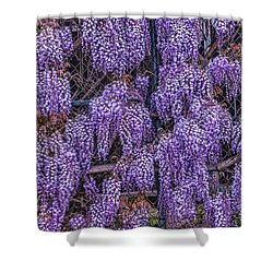 Wall Of Wisteria Shower Curtain