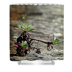 Wall Vegetation Shower Curtain
