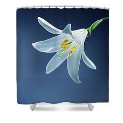 Wallpaper Shower Curtain