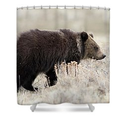 Wandering Shower Curtain