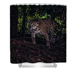 Wandering Jaguar Shower Curtain by Wade Aiken
