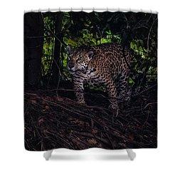 Wandering Jaguar Shower Curtain by Wade Aiken