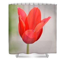 Warm Pink Tulip Shower Curtain by William Bartholomew