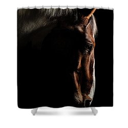 Warmblood Shower Curtain