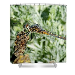 Warming-up - Darner Dragonfly Shower Curtain