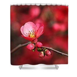 Warmth Of Flowering Quince Shower Curtain