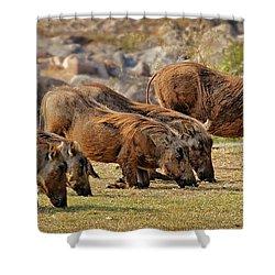 Warthogs Doing Lunch Shower Curtain by Joe Bonita