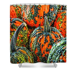 Warty Pumkins  Shower Curtain