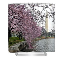 Shower Curtain featuring the photograph Washington Cherry Blossoms by Mitch Cat
