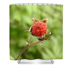 Wasp And Berry Shower Curtain