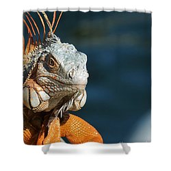 Shower Curtain featuring the photograph Watchful Eye by Pamela Blizzard