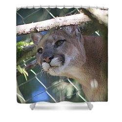 Shower Curtain featuring the photograph Watchful Eyes by Laddie Halupa