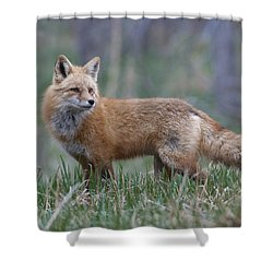 Shower Curtain featuring the photograph Watchful by Gary Lengyel