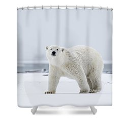 Watchful In The Arctic Shower Curtain