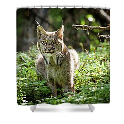 Watchful Mama Lynx Shower Curtain